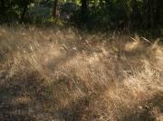 photo paysages graminees ete paysage : sous bois de fin d'été