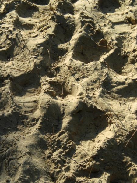 PHOTO sable Sport  - sable