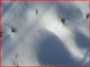 photo abstrait neige dune : neige 1