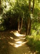 photo : sentier dans une forêt de bambous