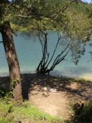 photo paysages arbres et bord d : arbres et bord d'eau