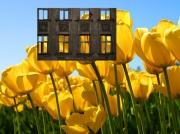 photo fleurs : facade volante