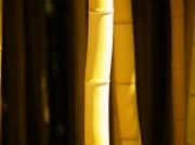 photo abstrait : portrait de bambou