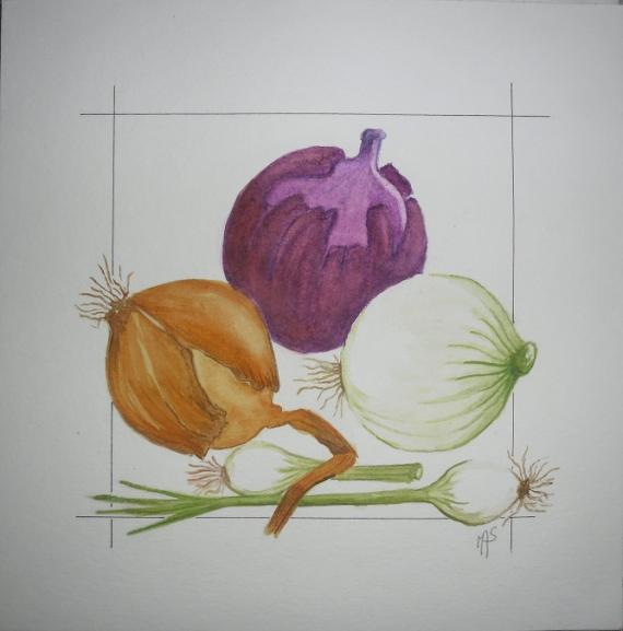 TABLEAU PEINTURE oignons aquarelle Fruits Aquarelle  - collection d'oignons