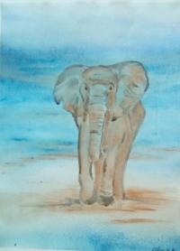 singleelephant