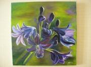 tableau fleurs fleur : Les Agapanthes