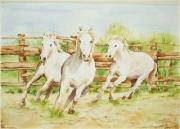 tableau animaux nature chevaux aquarelle camargue : CHEVAUX DE CAMARGUE