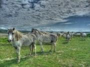 photo animaux animaux paysages sauvages les chevaux : La Roselière du Pont de Normandie