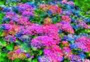 art numerique fleurs art numeriques fleurs nature : Les Hortensias