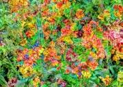 art numerique fleurs art numeriques fleurs nature : Le Bouquet de fleurs