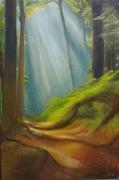 tableau paysages foret paysage arbre lumiere : Balade en Forêt