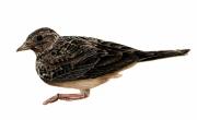 tableau : Oiseau