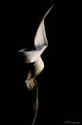 photo nature morte ballerine noir blanc fleur : Ballerine