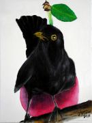 tableau animaux amsel merle blackbird : Tokazi a Linte