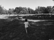 photo personnages moutons enfants noir blanc : Fier de rentrer son troupeau