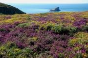 photo paysages bretagne nature paysage mer : Cap Fréhel 1