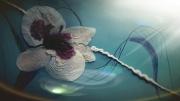 tableau fleurs fleur reflet aquatique : fleur et reflet