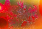 photo fleurs feuilles fleurs rouge erable : végétal rouge-