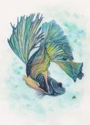 tableau animaux poisson combattant poisson bleu art poisson zen : POISSON COMBATTANT