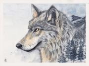 tableau animaux le loup aquarelle animal illustration loup loup peinture : LE LOUP