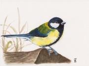 tableau animaux art d oiseaux mesange aquarelle oiseaux peinture mesange : LA MESANGE