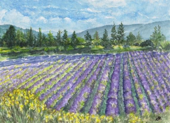 TABLEAU PEINTURE champs de lavande Provence Paysage Violet Paysages Aquarelle  - CHAMPS LAVANDE