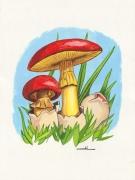 tableau autres champignon mediterraneen amanite des cesars empereurs : Champignons oronge