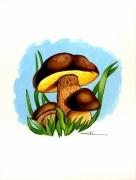tableau autres champignon bolet : Champignons bolet